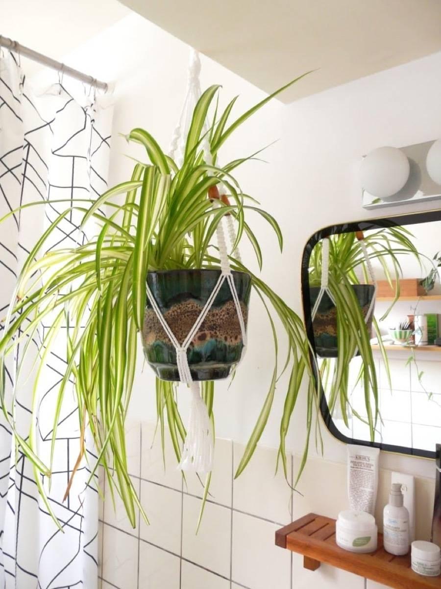 Rental bathroom solutions: Plants make everything better