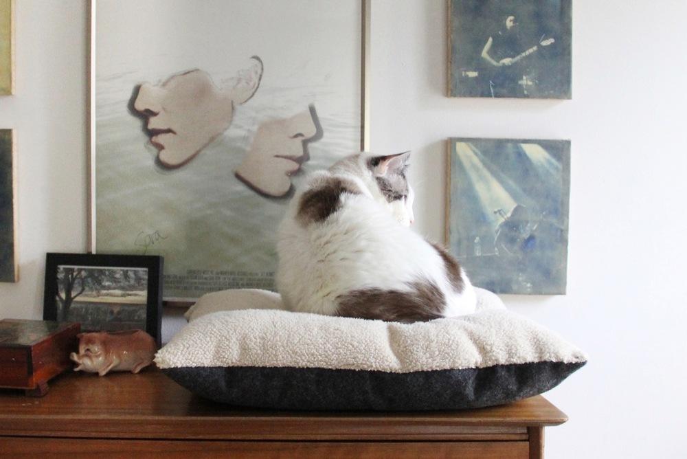 Make It! DIY Cat Bed